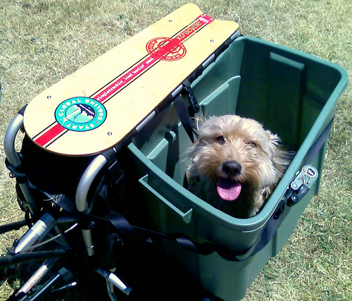 dog in a tub on an Xtracycle cargo bike