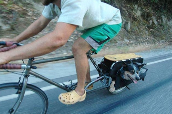 Dog in panniers of an Xtracycle cargo bike